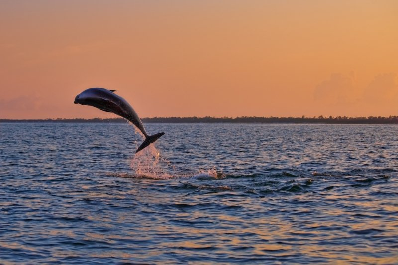 Destin Florida vacation - Dolphin sunset excursion