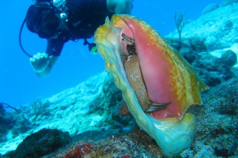 hottest caribbean summer destination for conch st croix